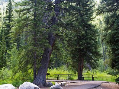Spruces - Big Cottonwood