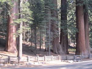 Dorst Creek Campground-Sequoia and Kings Canyon National Park