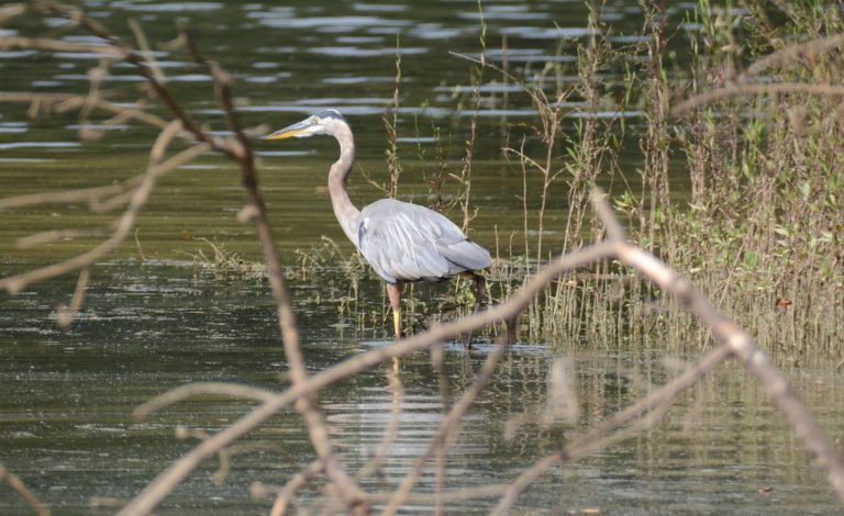 PAYNE CAMPGROUND-ALLATOONA LAKE