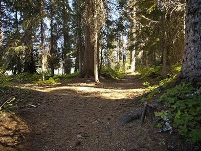 Trapper Creek Campground