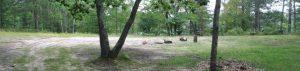 BEAR LAKE DISPERSED CAMPSITE