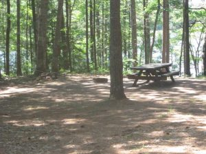 LITTLE BASS LAKE DISPERSED CAMPSITE